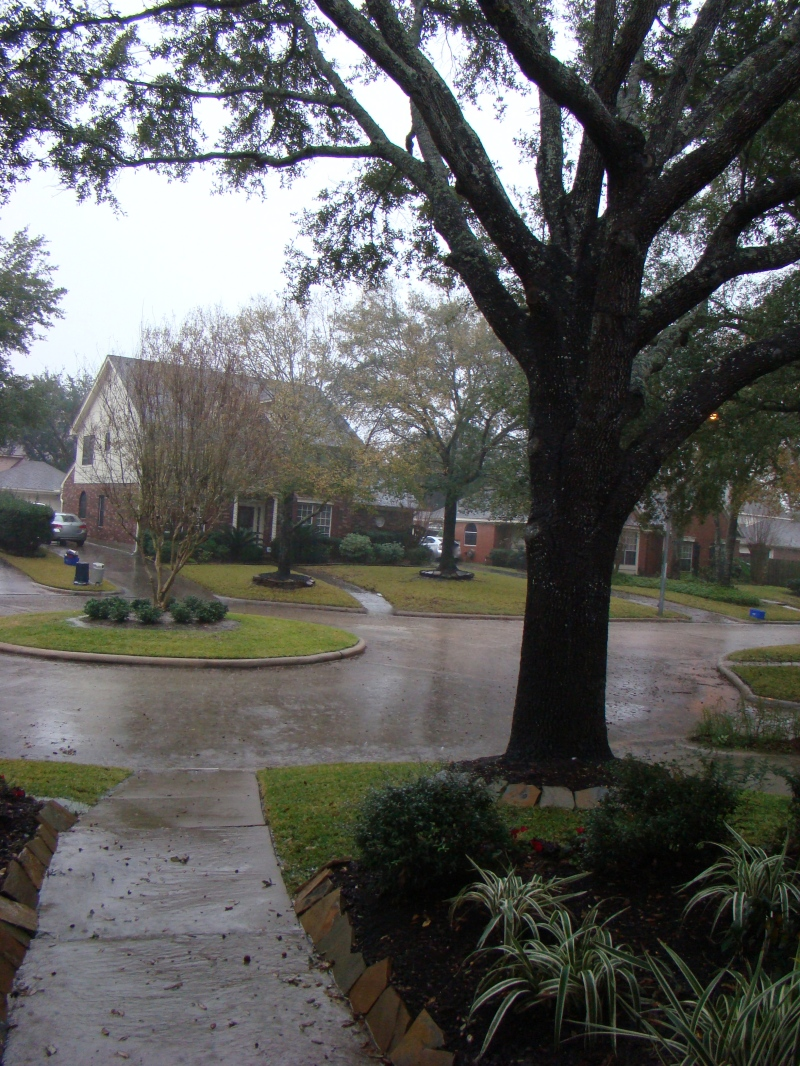 My rainy and cold view from the front door. Doesn't that make you want soup?
